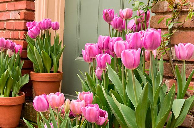 floristerialosangeles.com
